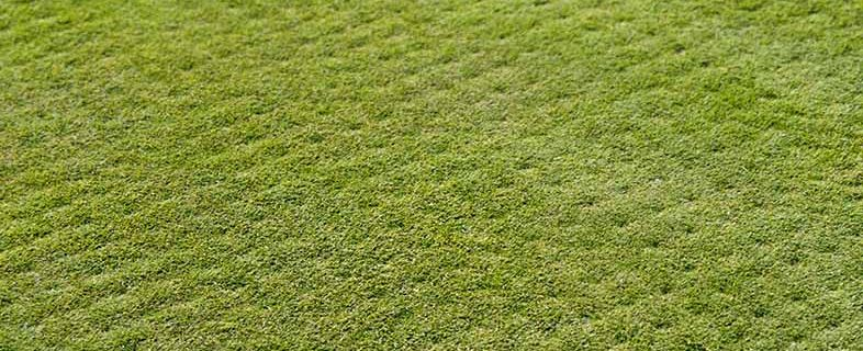 Aeration is also commonly used to relieve future thatching issues with grass.